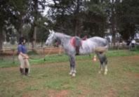 Liliana Cardile col suo pony Luna