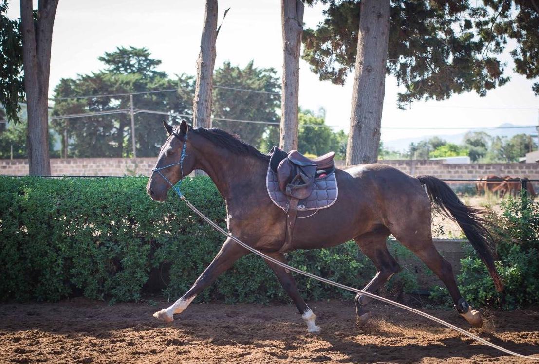 horsein-lavoro